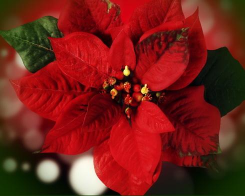 Рождественская звезда - один из символов Рождества.